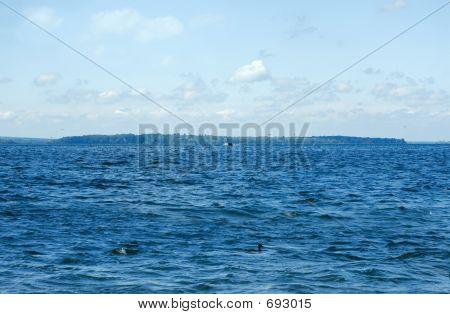 Lakes Waves