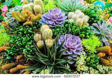 Mini Tropical Garden