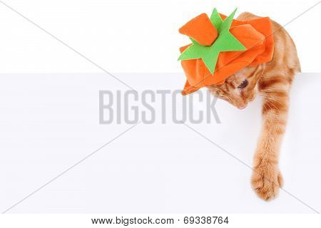 Pumpkin Cat Sign
