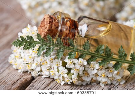 Extract Of Yarrow In A Bottle With Flowers On The Table