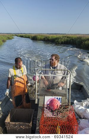 commercial fishermen harvesting crabs