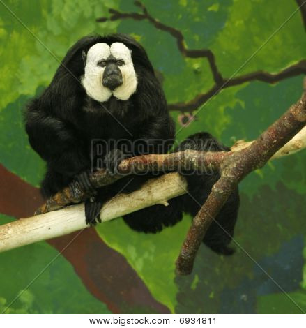 White Faced Saki Monkey Resting On A Tree Branch