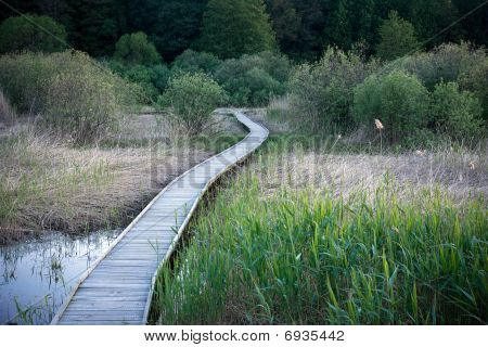 Wooden Pathway In A Swamp