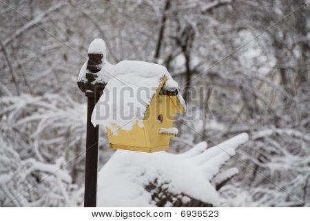 birdhouse congelado
