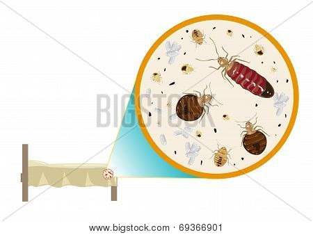 Bed Bug Zoomed In vector and raster