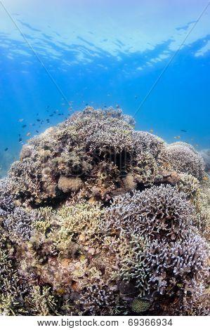 Sunbeams on a tropical reef
