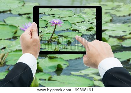Businessman Hands Tablet Taking Pictures Pink Lotus Flower On The Water