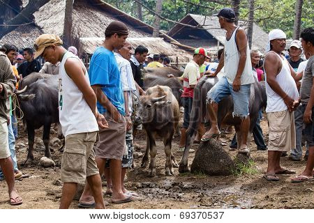 Buffalo And Other Animals At Market. Philippines