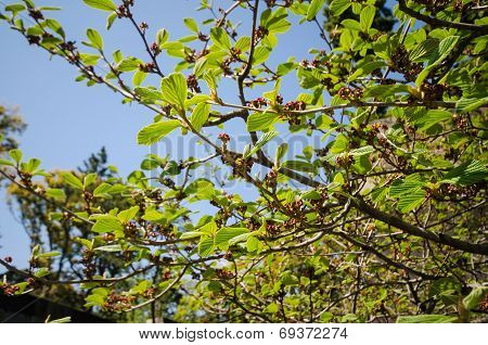 Tree Branch With Green Leaf And Blooming Flower