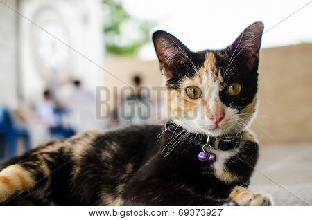 Black And Orange Color Cat Staring At Camera