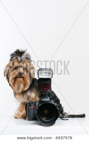 Funny Little Dog With Digital Camera