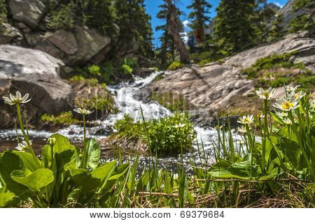 Lush Greenery And Mountain Creek Colorado Rockies