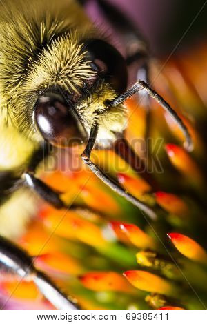 Bee head and eyes on blur flower extreme macro