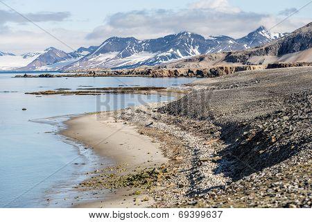 Arctic summer landscape - Spitsbergen