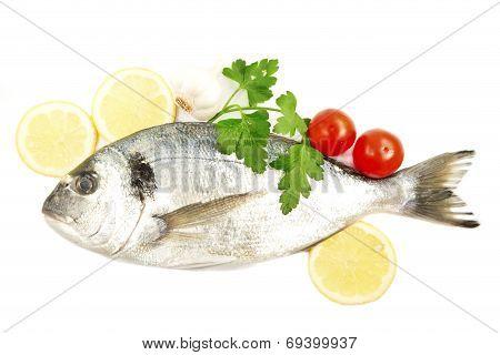 Aurata Fish