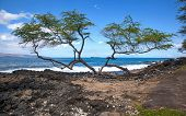 stock photo of off-shore  - Molokini off the shores of Maui between the trees