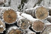foto of raw materials  - Stacked tree wood logs at winter forest - JPG