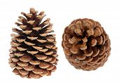 image of cone  - two pine cones isolated on white background - JPG
