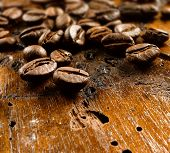 foto of caucus  - coffee beans  - JPG