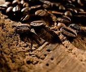 pic of caucus  - coffee beans  - JPG