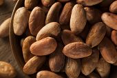stock photo of cocoa beans  - Raw Organic Cocoa Beans in a Bowl - JPG