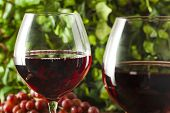 image of merlot  - Refreshing Red Wine In a Glass with Grapes - JPG