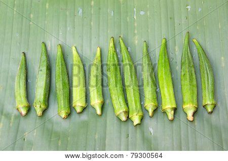 Fresh Okra With Banana Leaf Background