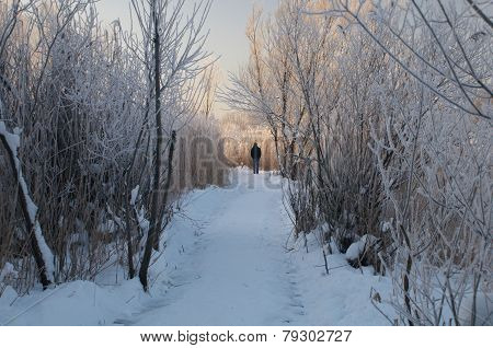 Man On Pathway