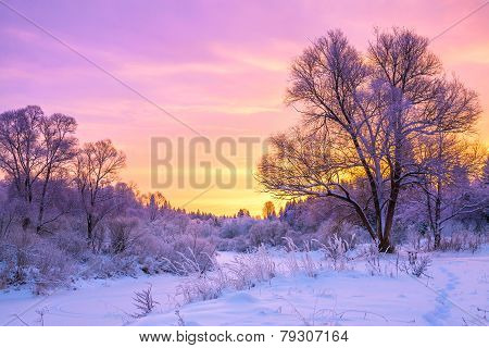 Winter Landscape With Sunset And The  Forest