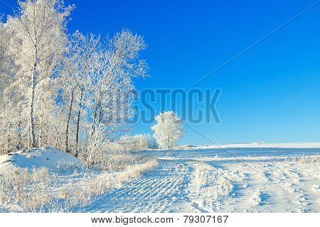 Rural Winter Landscape A With The Blue Sky, A Field And The Forest