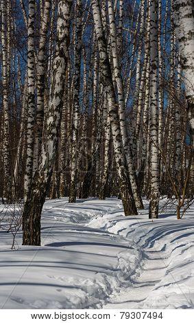 Footpath Trodden In Snow