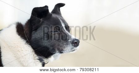 Dog Looking Forward