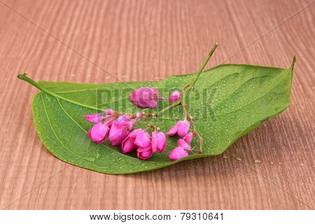 Coral Vine On Leaf