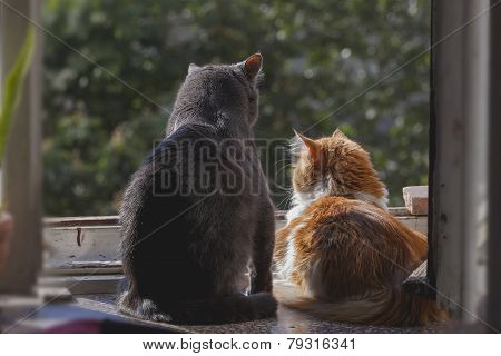 Two Cats On The Window