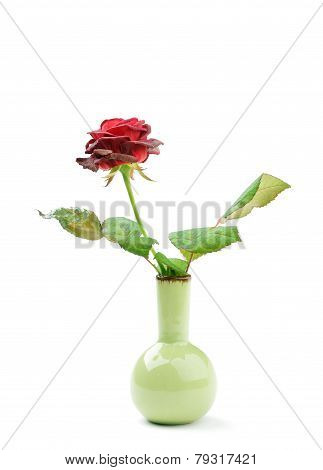 Drying Rose In A Vase