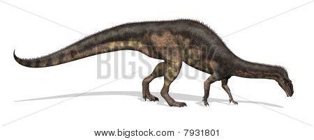 Plateosaurus Dinosaur