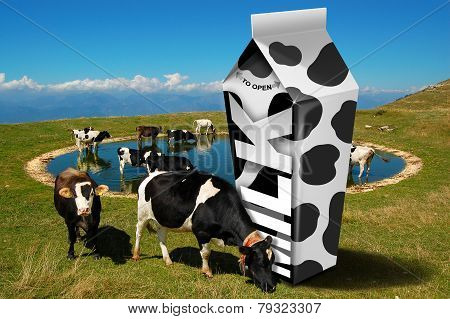 Cows Grazing - Milk Packaging