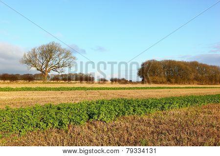 Wolds scenic landscape