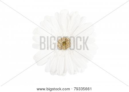 Close up of a beautiful white flower isolated
