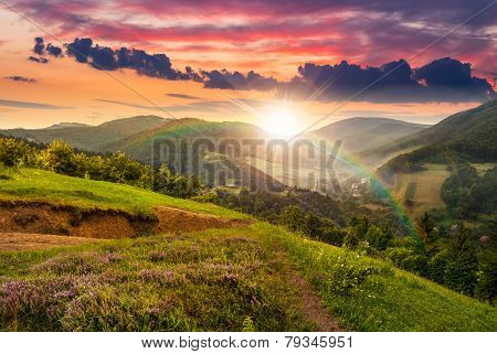Flowers On Hillside Meadow With Forest At  Sunset