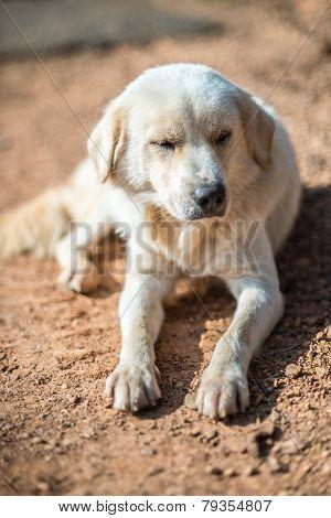 Crouching Vagrant Dog
