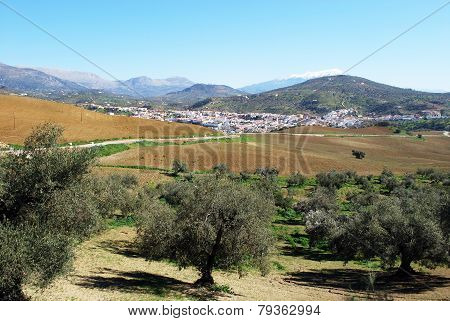 Olive groves and town, Rio Gordo.