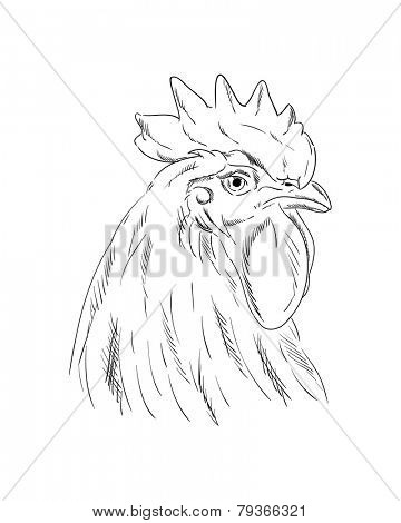 vector - A cock head isolated on a white background