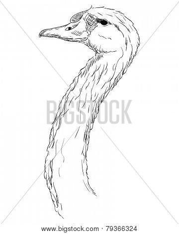 vector - A swan head isolated on a white background