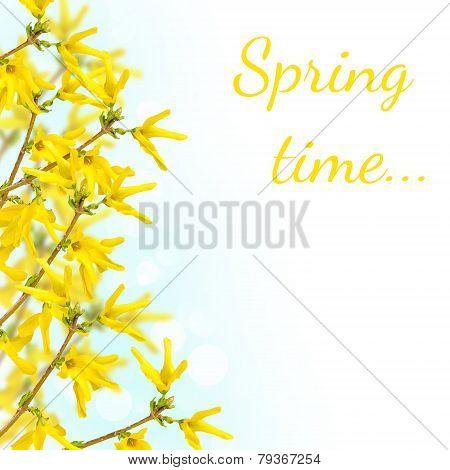Postcard With Spring Flowering Bush