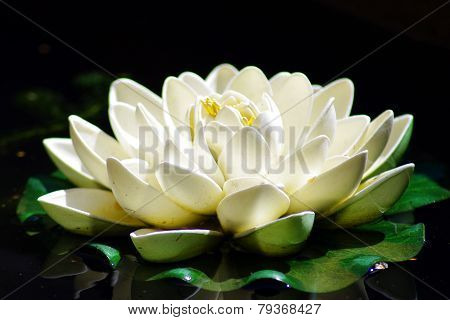 Stunning waterlily
