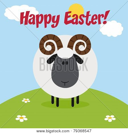 Cute Ram Black Head Sheep