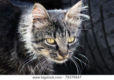 Old Cat   Close Up,