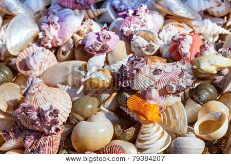Starfish and seashells souvenirs
