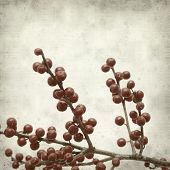 foto of winterberry  - textured old paper background with winterberry branches - JPG